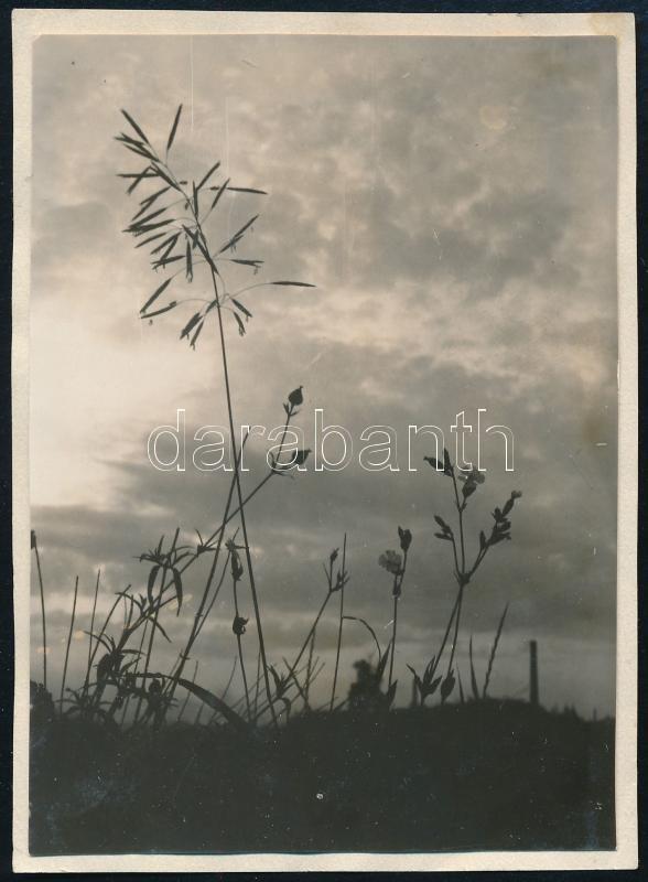 1929 Kinszki Imre (1901-1945) budapesti fotóművész hagyatékából, a szerző által feliratozott, datált és sorszámozott vintage fotó (Rákos, ez a szerző 237. sz. felvétele), 8,6x6,1 cm