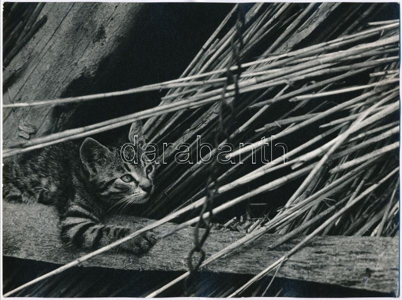 cca 1972 Giltán Tivadar budapesti fotóművész, pecséttel jelzett vintage fotóművészeti alkotása (vadász ösztön), 18x24 cm