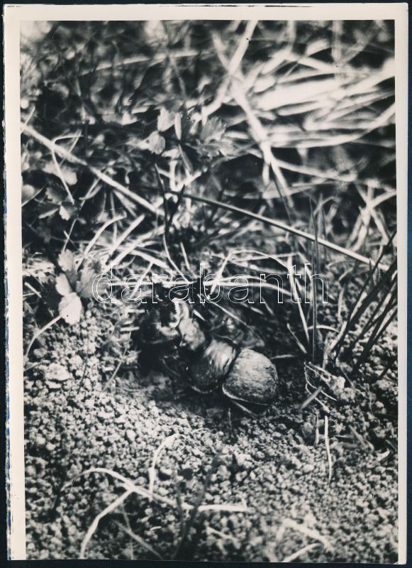 cca 1934 Kinszki Imre (1901-1945) budapesti fotóművész hagyatékából, a szerző által - írógéppel - feliratozott, vintage fotó (élet az avarban), 16,8x12 cm