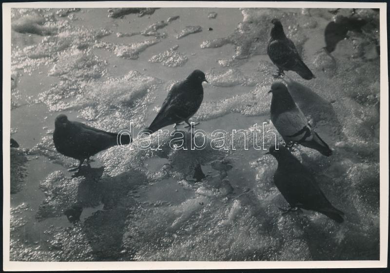 cca 1933 Kinszki Imre (1901-1945) budapesti fotóművész hagyatékából, pecséttel jelzett vintage fotó (Galambok), 11,5x17 cm