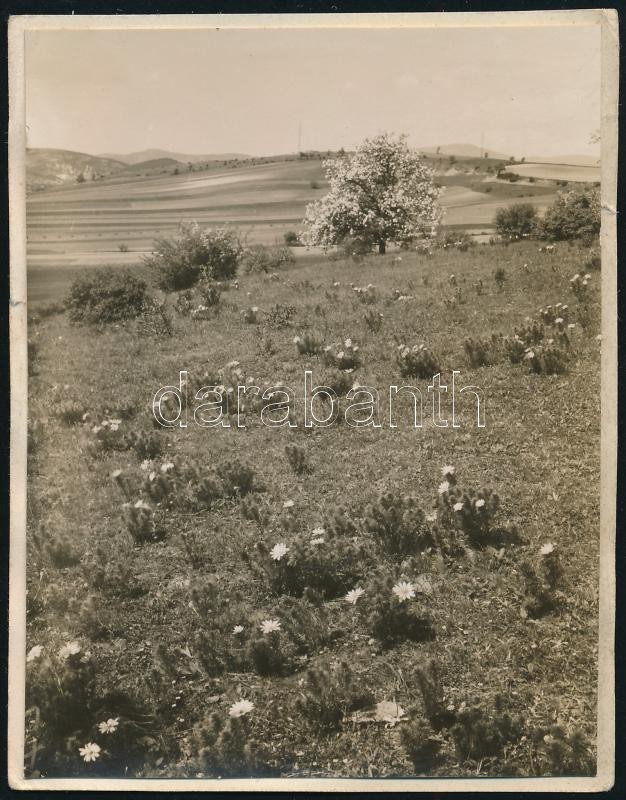 cca 1932 Kinszki Imre (1901-1945) budapesti fotóművész hagyatékából, a szerző által németül feliratozott vintage fotó, 8,4x6,2 cm