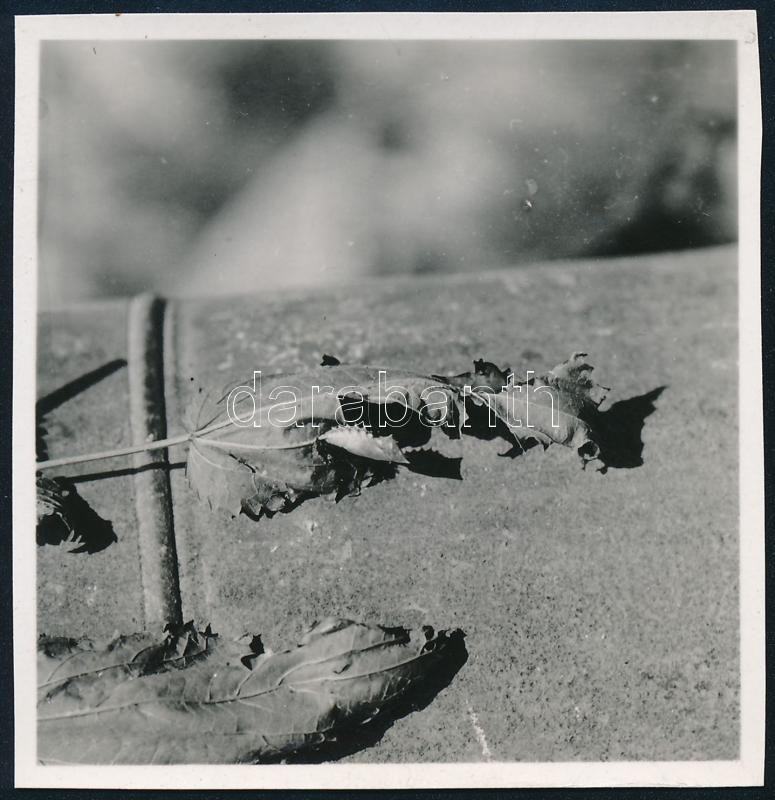cca 1938 Kinszki Imre (1901-1945) budapesti fotóművész hagyatékából, jelzés nélküli vintage fotó (száraz levelek), 5,9x6 cm