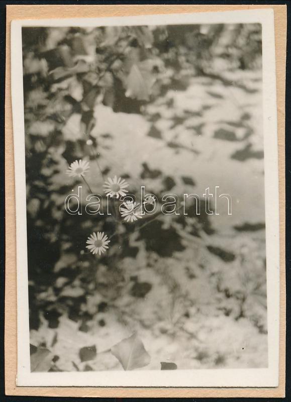 cca 1932 Kinszki Imre (1901-1945) budapesti fotóművész hagyatékából jelzés nélküli vintage fotó (négy virág), 6x4,3 cm