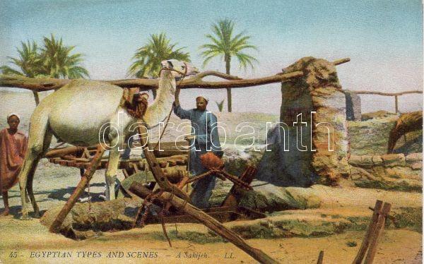 Sarkijeh, Sharqia, camel