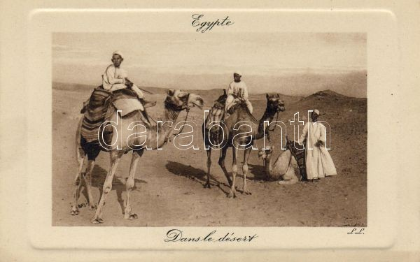 Camels in the desert, Tevék a sivatagban