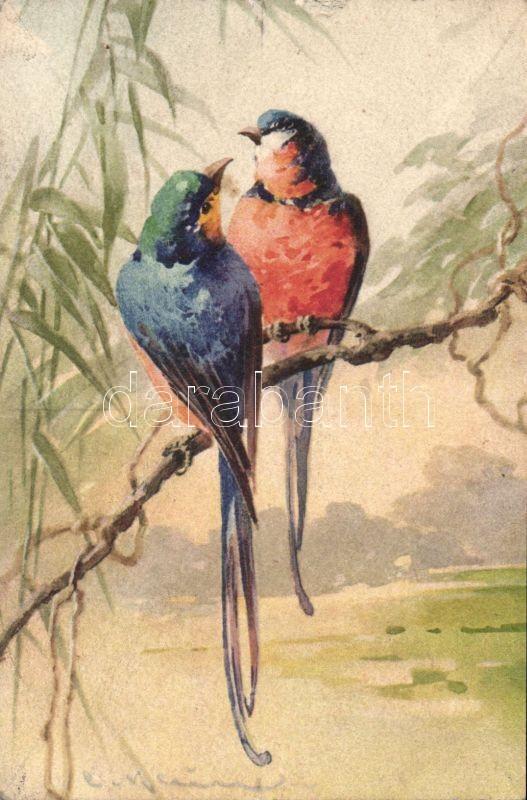 Birds s: C. Klein, Madarak s: C. Klein