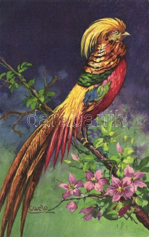 Parrot s: Carlo, Papagáj s: Carlo