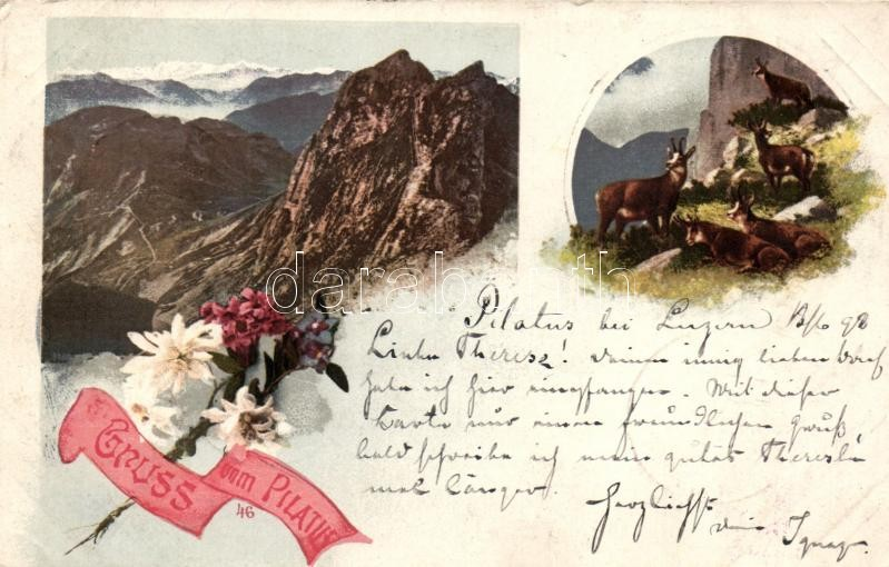 1898 Mount Pilatus, Gruss vom Pilatus, floral