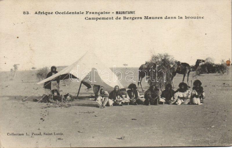 Mauritanie, Campement de Bergers Maures dans la brousse / Mauritania, Moorish shepherds camp in the bush