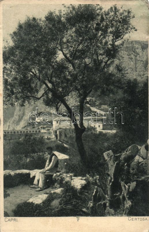 Capri Certosa