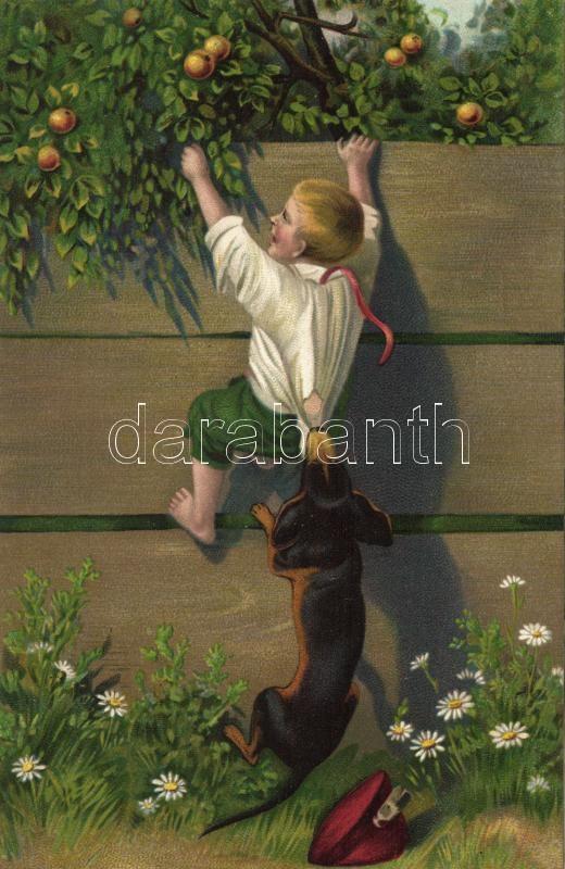 Stealing apples, boy, dog, humour litho, Almát lopó fiú, tacskó, humor litho
