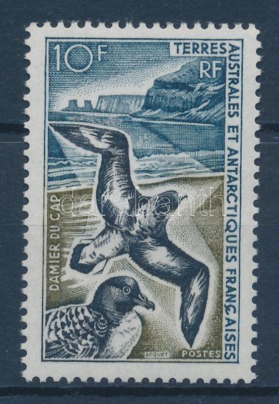 Bird Vogel Madár