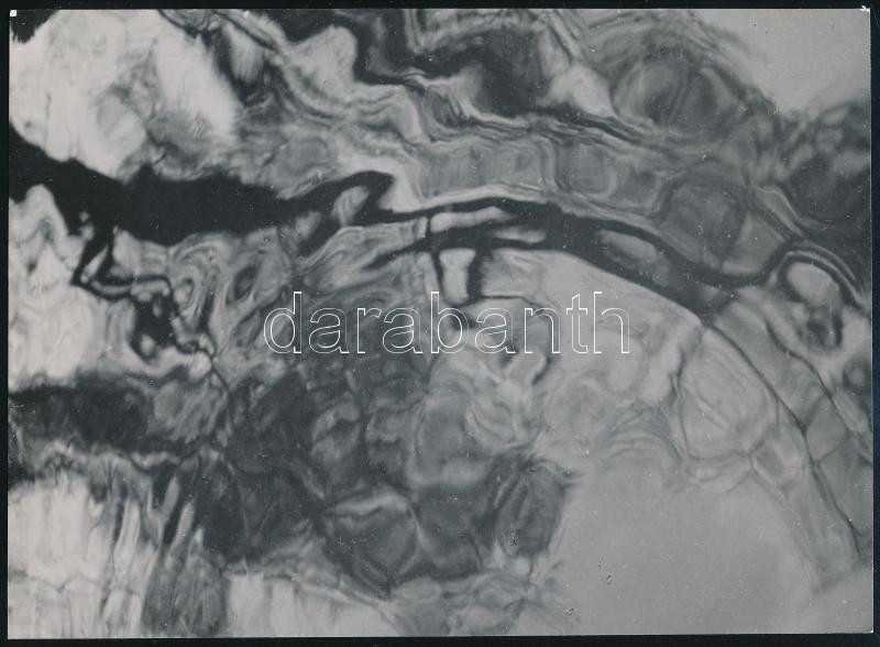 cca 1930-1940 Kinszki Imre (1901-1945): Tükröződés, pecséttel jelzett vintage fotóművészeti alkotás, 17x12 cm / cca 1930-1940 Imre Kinszki (1901-1945): Reflection,  artist's stamp on the verso, 17x12 cm