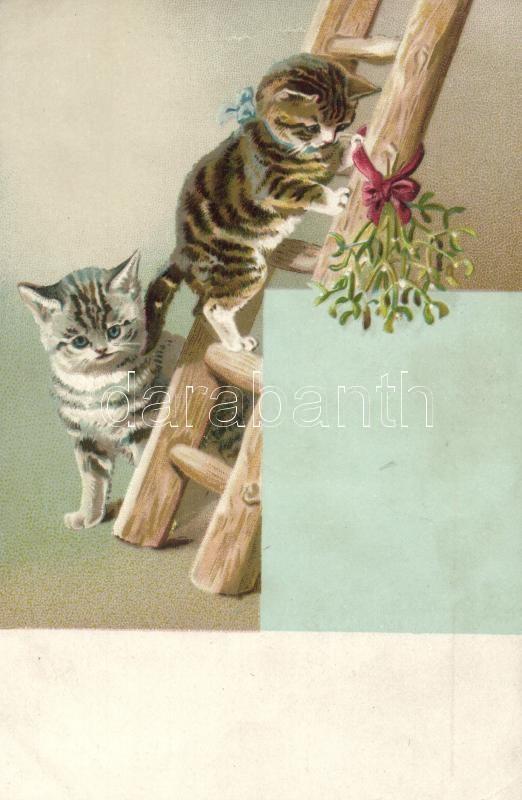 Cats litho, Macskák litho
