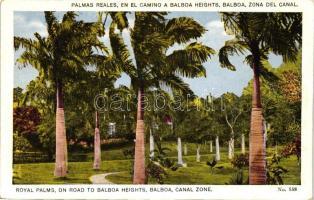 Panama City, Balboa, Royal Palms, road to Balboa Heights