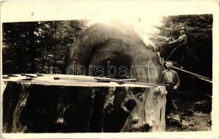 1921 Californian lumberjacks with fallen tree photo, 1921 kaliforniai favágók, fotó