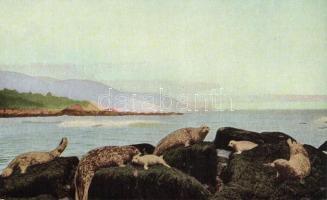California, Leopard seal, Harbor seal