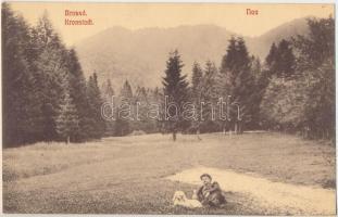 Brassó, Kronstadt, Brasov; Noa, rét, kutya / meadow, dog