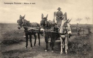 Campagna Romana. Attaco di muli / Rural Italian peasant, folklore, Olasz földműves, folklór
