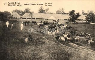 Boyoma Falls, Stanley Falls; Romée farm, 5 Centimes Ga.