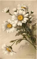 Oxeye daisy, flower, s: A. Haller, Meissner & Buch, litho, Margaréte, virág, s: A. Haller, Meissner & Buch, litho
