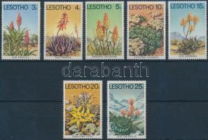 Desert plants set, Sivatagi növények sor