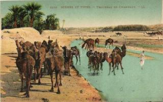 Troupeau de Chameaux / Herd of Camels, North African folklore, Észak-afrikai folklór, tevecsorda