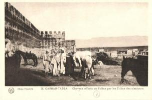 Kasba Tadla, Casbah-Tadla; horses offered to the sultan by the tribes surrounding