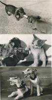 44 db MODERN fekete-fehér motívumlap; kutyák / 44 modern black and white motive cards; dogs