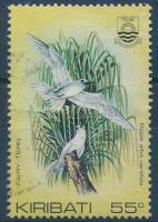 Madár Bird