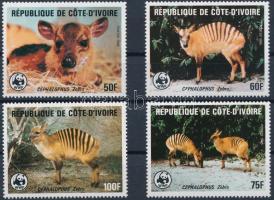 WWF Zebra-bóbitásantilop sor, WWF Zebra duiker set