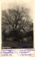 1928 Abapuszta, Balkány; Reviczkyék öreg fája, photo (EK)