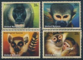 Monkey set, Majom sor