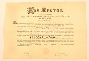 1954 Orvosi diploma szakadással