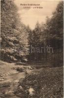 Modor, Modra; erdő részlet, Lili híd / forest, bridge (EK)