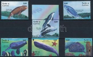 Whale set, Bálna sor