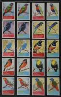 199 db belga gyufacímke, kartonra ragasztva, különféle madármotívumos sorozatok