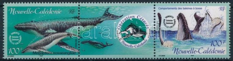 Tengeri emlősállatok védelme sor hármascsíkban Protection of marine mammals set in stripe of 3