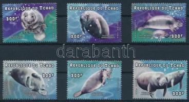 Seals, Fókák