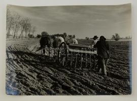 cca 1959 Dezső Pál: Őszi vetés, feliratozott vintage fotóművészeti alkotás, 30x40 cm