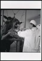 cca 1950 Fogászati kezelés, korabeli vintage negatívról készült mai nagyítás 25x18 cm-es fotópapíron