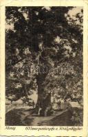Kőszeg, 600 éves gesztenyefa a Királyvölgyben, Róth Jenő kiadása (Rb)