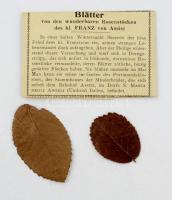 cca 1930 Assisi zarándokhelyi rózsabokorról származó levelek eredeti papírtokban / Blätter von den wunderbaren Rosenstöcken des hl. Franz von Assisi
