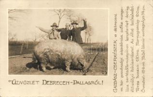 1926 Debrecen-Pallag, Gazdász cserkészek egy szőke mangalica hízósertéssel, photo