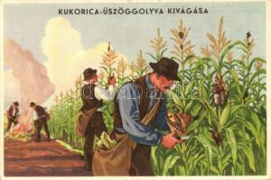 Magyar mezőgazdasági propaganda, kukorica üszöggolyva, Klösz / Hungarian agricultural propaganda, corn smut, Klösz