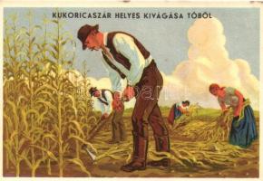 Magyar mezőgazdasági propaganda, kukoricaszár vágása, Klösz / Hungarian agricultural propaganda, cutting the corn stover, Klösz