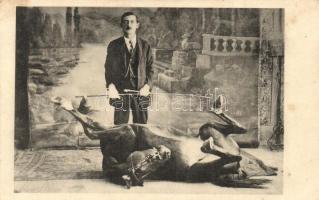 Lóidomár háton fekvő lóval / Horse trainer with twisted horse