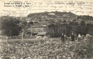 Bród, Slavonski Brod; Brodski vinegradi / szőlőskertek / wine gardens (EK)