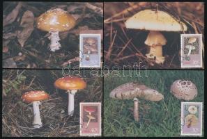 Mushroom set 4 CM Gomba sor 4db CM-en