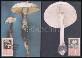 Mushroom set 4 CM Gomba sor 4 db CM-en